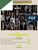 201406.pdf