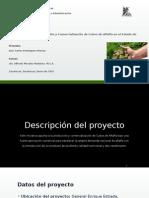 Presentación Cubos Alfalfa