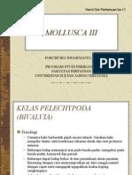 Mollusca III