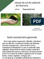 Plante Indicatoare de Sol Din Pădurile