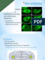 Centrosoma y Reticulo-Endoplasmico