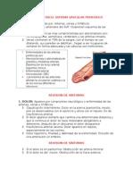 Vascular Periferico