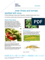 Western Flower Thrips and TSWV