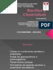 Bacillus Clostridium