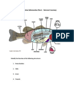 Fish Dissection Information Sheet - Internal Anatomy