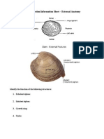 Clam Dissection Information Sheet - External Anatomy