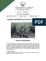 MANEJO AGRONÓMICO DEL CULTIVO DEL PALTO