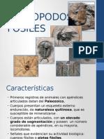 ARTROPODOS  FOSILES