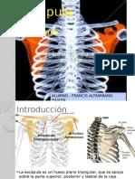 anatomia de escapula.pptx