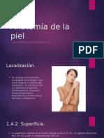 Anatomía de la piel.pptx