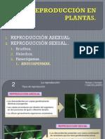 12 La Reproduccion en Plantas