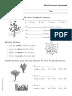 Plants Reinforcement Worksheet