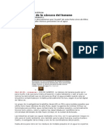 Investigación Científica_cascara de Banano