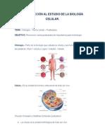 biologia # 13
