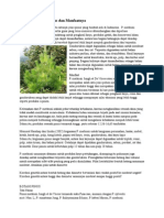 Mengenal Pohon Pinus Dan Manfaatnya