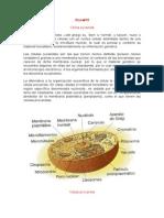biologia celulas tipos