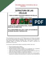 Organización Estructural y Funcional de Las Células