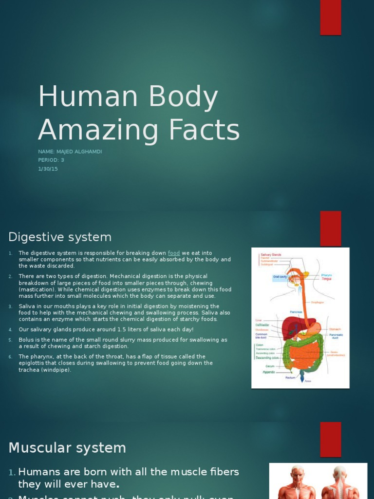 human body amazing facts | Digestion | Nervous System
