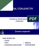 histologie-lp4_conjunctiv_2.ppt