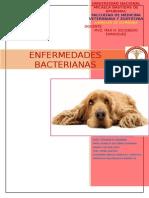 ANIMALES DE COMPAÑIA.doc
