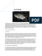 Budidaya Ikan Kakap