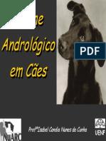 Exame Andrologico Em Caes
