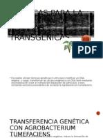 Plantas Transgenicas
