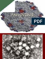 PARVOVIRUS 2015