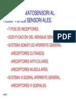 Sistema Somatosensorial Receptores Sensoriales