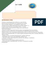 LOS MATERIALES estructura tarea.docx