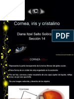 Cornea , Iris, Cris