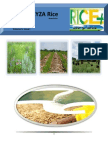 3rd February,2015 Daily Exclusive ORYZA Rice E_Newsletter by Riceplus Magazine