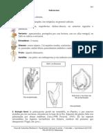 24 Salicaceae.pdf
