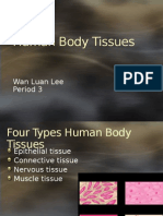 human body tissues