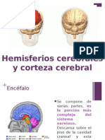 Hemisferios y Corteza Cerebral