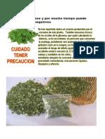 Moringa oleifera Tambien Llamada Macazal EN VENEZUELA