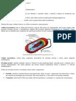 ORGANELAS CITOPLASMÁTICAS 02
