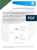 Clasificación de los libros contables y la división de los libros auxiliares