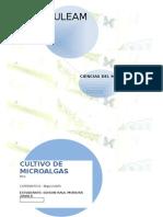 Cultivo Microalgas