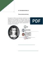 EL POLÍGONO DE WILLIS.docx
