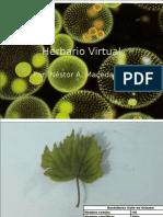 Herbario Virtual