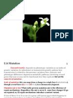 L14 Biol261PmutationF2013