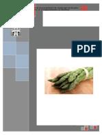 Proceso y Cultivo Del Espárrago Verde en La Libertad. FINAL