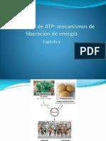Respiracion Celular Fotosintesis