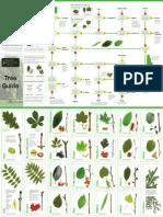 Tree Health Survey Tree ID Guide WEB
