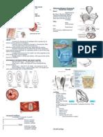 AnaPhysio of the Larynx