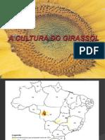 A Cultura Do Girassol