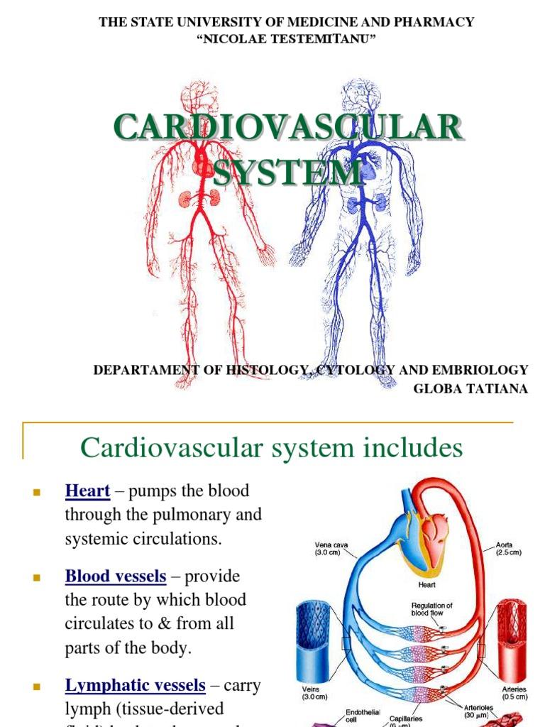 Cvs Capillary Artery