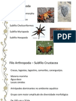 14.Arthropoda3