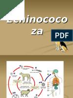 Echinococoza. 40